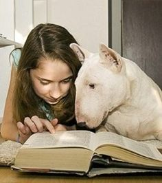 Bull Terrier and a girl reading a book