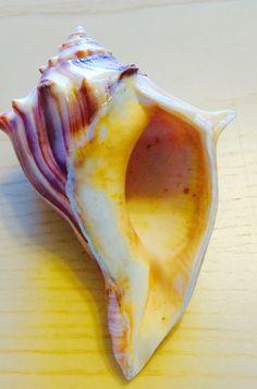 Shells, Banana, Fish, Fruit, Seashells, Conchas De Mar, The Fruit, Sea Shells, Bananas