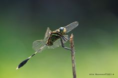 d_fly 1 by Atik  Rahman on 500px