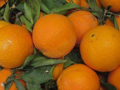 Oranges in Amalfi.