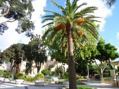 「Upper Barracca Garden」Valletta, Malta