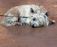 6 Tips on How to Train an Older Dog to Walk Calmly on a Leash