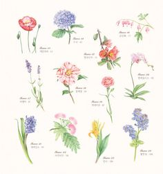 A goodday to paint - Pretty botanical coloring book of Korean