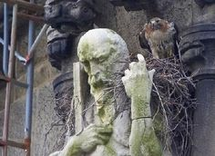Funny Pictures With Statues › Zuza Fun Fun With Statues, Funny Statues, Garden Sculpture, Lion Sculpture, Birds Of Prey, Bird Feathers, Sculpting, Sculptures, Funny Pictures