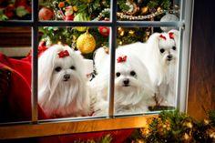 merry christmas dog - Google 検索