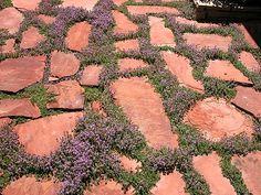 Patio with Pink Chintze flagstone and Creeping Thyme. Patio Bar, Backyard Patio, Colorado Springs, Garden Paths, Garden Landscaping, Landscaping Design, Flagstone Pathway, Walkways, Stone Pathways