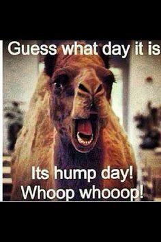 Happy Hump day my fellow people