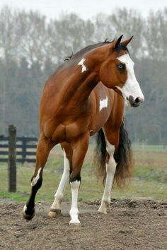 Beauty paint horse in a pasture .