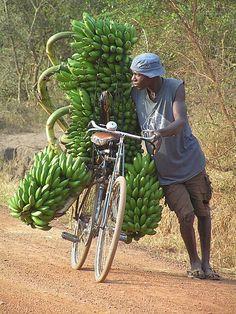 Hard working man taking his bananas to the market in Uganda.