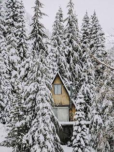 Hus inbaddat av snogranar