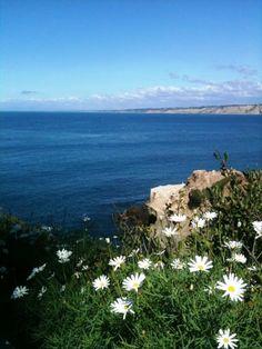 ciao! newport beach: a morning in La Jolla