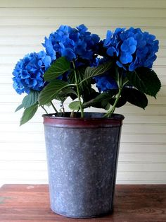 Vintage Metal Sap Bucket/Pail Large Galvanized with by FernHillRd, $25.00