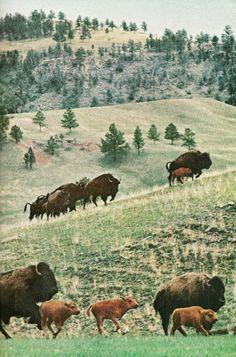 Custer State Park . South Dakota National Geographic | November 1963