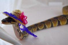 Cute snake wearing hats. - Imgur