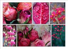 Daisy Alley pink roses with images flowers and berries from Pinterest