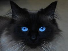 Black Face With Blue Eyes - Stunning :)
