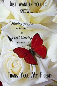 Red butterfly on white roses Art Print by Garry Gay. All prints are professionally printed, packaged, and shipped within 3 - 4 business days. Valentine's Day Quotes, Hug Quotes, Sister Quotes, Wall Quotes, Good Morning Greetings, Good Morning Quotes, Love My Best Friend, My Friend, Friend Friendship