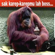 710 Gambar Kata Hewan Lucu Bahasa Jawa HD