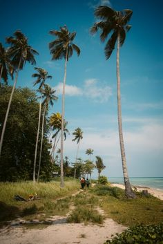Full guide to the Bohey Dulang day trip on a Tun Sakaran Marine Park Island Hopping trip. All you need to know about the Semporna Islands. Semporna, Day Trip, Golf Courses, Island, Park, Islands, Parks