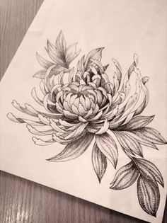 sketches, Chrysanthemum, tattoo, cute shoulder or hip idea