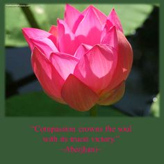 """""""Compassion crowns the soul with its truest victory."""" ~ Aberjhani from the poem Angel of Healing, for the Living, the Dying, & the Praying published in The River of Winged Dreams. Quote published in Journey through the Power of the Rainbow.  Embedded image permalink"""