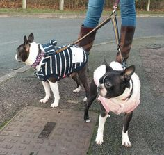 Make your life a little easier when walking two dogs with one of our Duel lead couplers. They allow you to attach one of the zinc alloy hooks to each one of your dogs and then attach your main walking lead to the central O ring. Two Dogs, Weekend Is Over, Boston Terrier, French Bulldog, Your Dog, Walking, Sunny Weather, Hooks, Animals