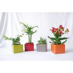 Mini plante en pot céramique - Plante publicitaire