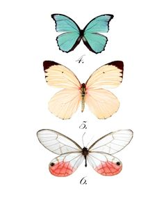 Free butterfly print download from http://domesticfashionista.com