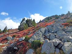 At the top of the Canigou - taken October 2012