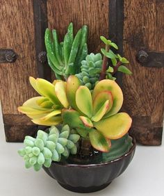 #Succulent~ just a fun pot to look at, great for patio table I think.