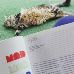 Pasiones...mi gato y el diseño Animals, Gatos, Animales, Animaux, Animal, Animais