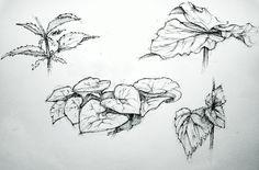 Wild plants fineliner drawing.
