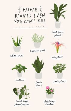 Bookmark this for a *FREE* printable planner insert highlighting 9 different plants that are impossible to kill.
