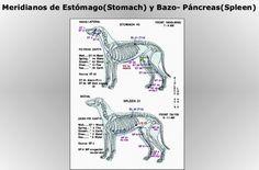 BIOMAGNETISMO PARA MASCOTAS - BIOMAGNETISMO HOLÍSTICO PARA TODOS