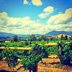 Interested in australien wine? Than read soon the news on www.vin-en-vogue.com ... Enjoy your winelife #wine #vevkeh #wine #weinblog #winerist #wineonmytime #winepleasure #winelifestyle #australia #travel #vineyard @winepleasure @wine_everyday @wineonmytime @weinrouten @wonderful_places