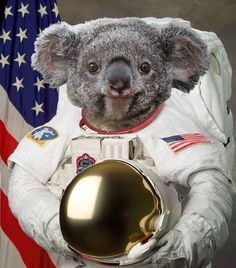 Mr Ready-for-his-Mission,   The 29 Cutest Koalas In The History Of Cute