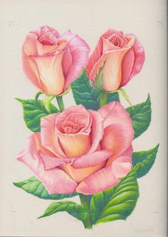 """an old drawing done a few years back. """"do you like your rose's?"""""""