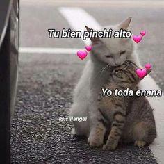 Funny Spanish Memes, Spanish Humor, Funny Memes, Memes Lindos, Tumblr Love, Cute Love Memes, Love Phrases, Cartoon Memes, Wholesome Memes