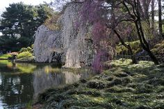 7 Summer Day Trips in the Tri-State Area Brooklyn Botanical Garden, Botanical Gardens, Cherry Tree, Cherry Blossom, Another World, Beautiful Gardens, Wedding Venues, Beautiful Places, City