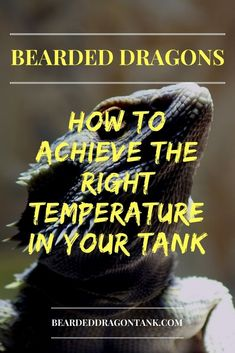Bearded Dragon Temperature Made Easy – A Practical Guide – Animals Time Bearded Dragon Terrarium, Bearded Dragon Cage, Bearded Dragon Habitat, Bearded Dragon Substrate, Bearded Dragon Lighting, Dragon Facts, Some People Say, Mother Of Dragons, Best Diets