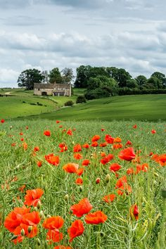 Poppy Field by Alistair Nicolson - Photo 158239839 - 500px