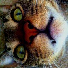 My baby kitty.