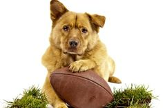 Cute dog playing with football
