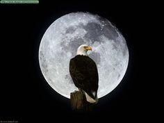 Como buen nacido en junio, la luna me define por el carácter. Me gusta contemplarla y me ciego ante su grandeza.  El águila es mi visualización de cuando la contemplo tan vivo y audaz como el ave y tan majestuoso como ella