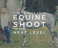 Want to be a great Equine Photographer?
