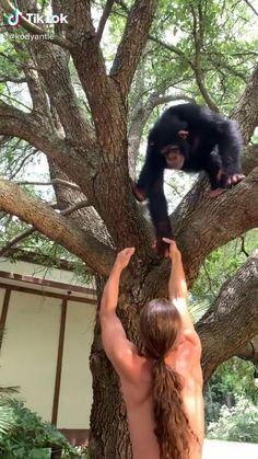 #tiktok #animals #chimpanzee #monkey #love Cute Little Animals, Cute Funny Animals, Cute Cats, Funny Cats, Animals Are Beautiful People, Beautiful Creatures, Cute Animal Videos, Animal Kingdom, Pet Birds