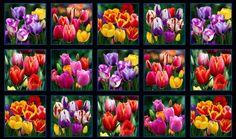 Stoff Blumen - Panel, Tulpen, Digital, 15 Motive,  Stoff - ein Designerstück von ABC-Designerin bei DaWanda