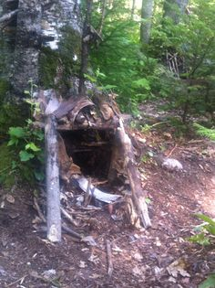 A fairy house in the maine woods