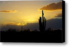 A Saguaro Sunset  Canvas Print By Saija  Lehtonen