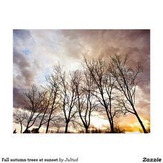 Fall autumn trees AT sunset postcard